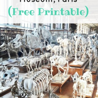 Treasure Hunt at The Natural History Museum Paris (+ Free Printable). Adapted for kids with autism and other special needs. | speciallearninghouse.com