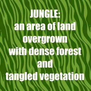 Jungle - definition SNJ