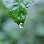 A Rain Day