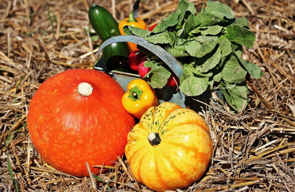 Kürbisse und Gemüse im Herbst