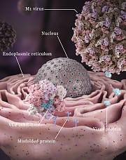 Onkolytische Viren bei der Arbeit