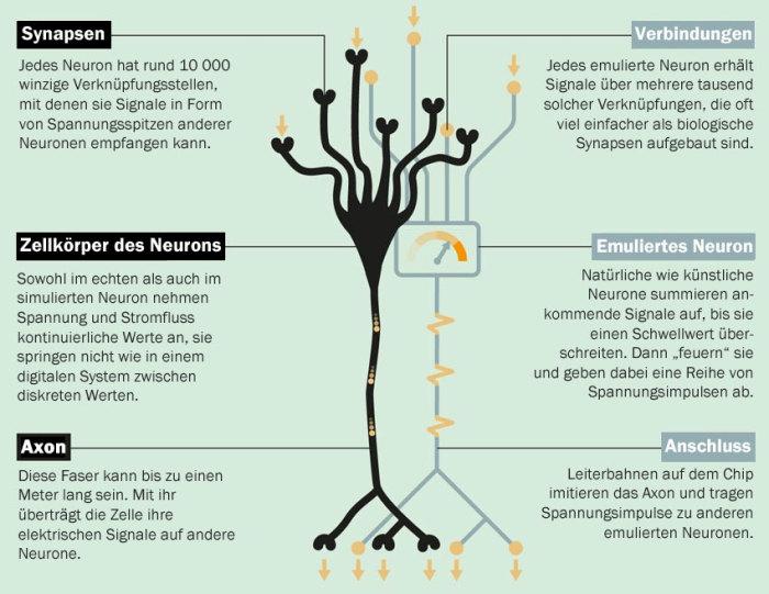 Biologisch inspiriert