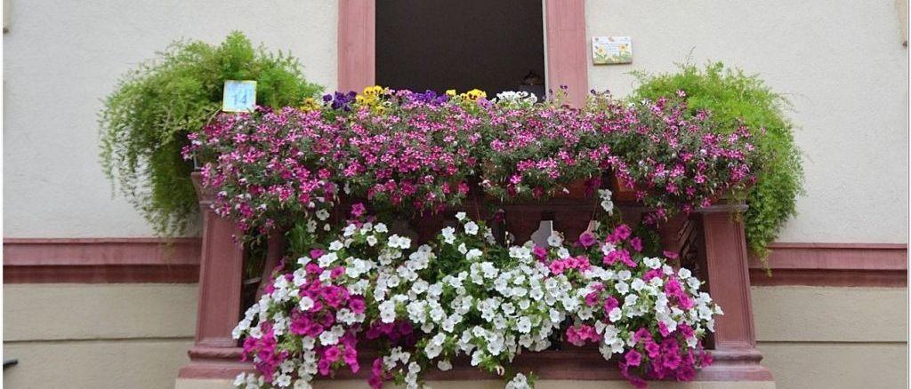 """Finestre, Balconi e Vicoli fioriti"""" la premiazione a piazza Vallegloria"""