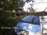 albero-su-auto (7)