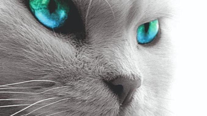 Passaparola, leggi, gusta e pensa, dedicato agli amici felini