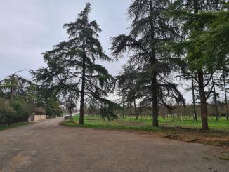 Via xxv Aprile e adiacente area verde: completati lavori messa in sicurezza