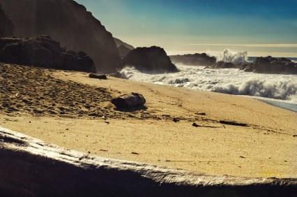 Bodega Beach
