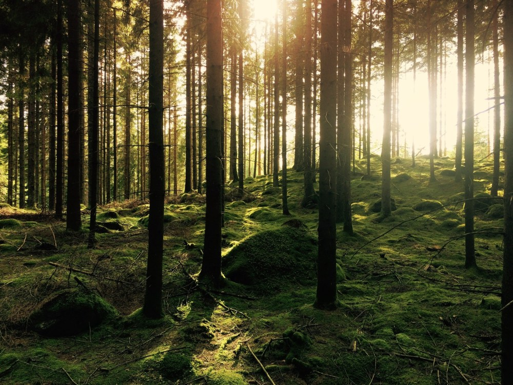 forest, trees, earth