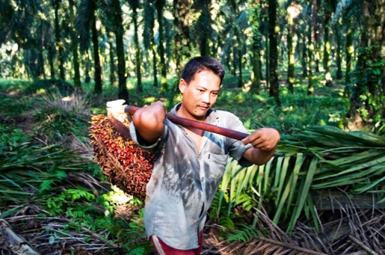 Indonesia facts: poverty & agriculture