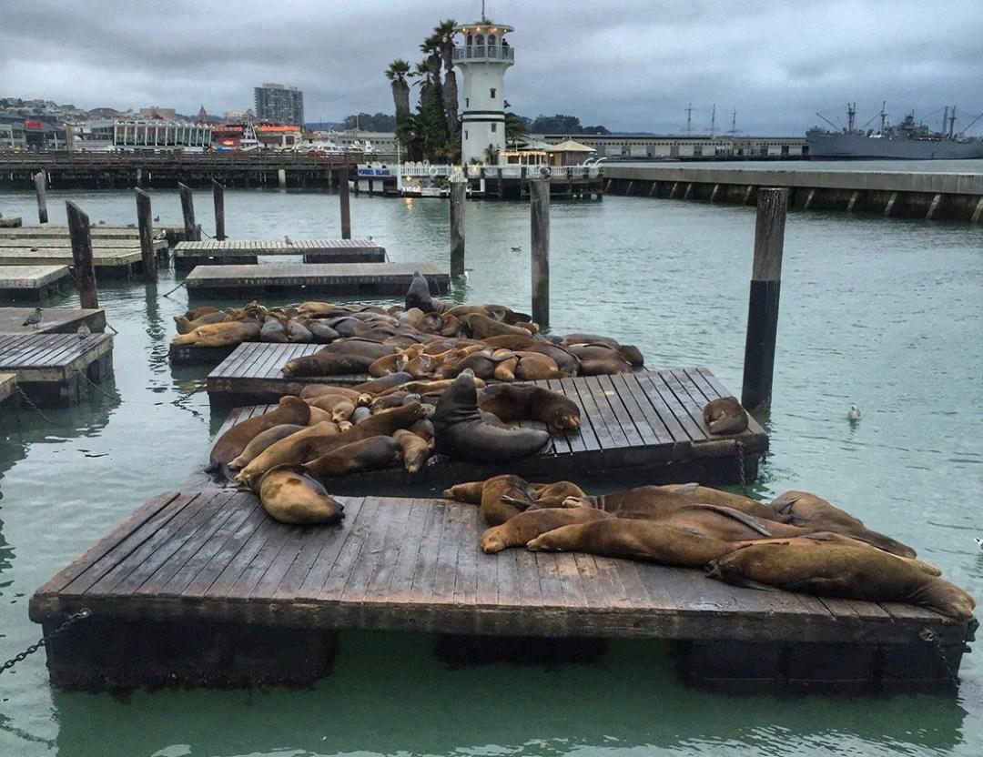 San Francisco Must See: Pier39