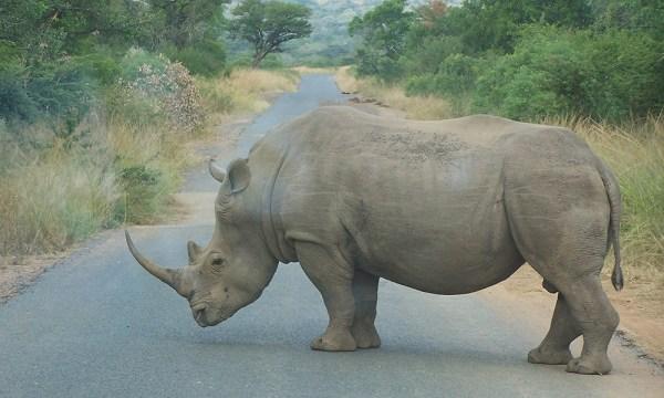 safari_africa_big_5_rhino