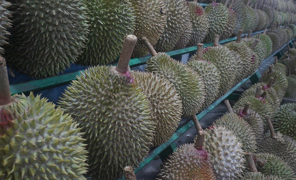 Food to try in Singapore: Durian fruit