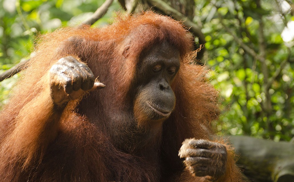 Things to do in Singapore: Singapore zoo