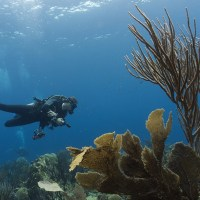 11 Of The Best Dive Sites in Bonaire - Caribbean