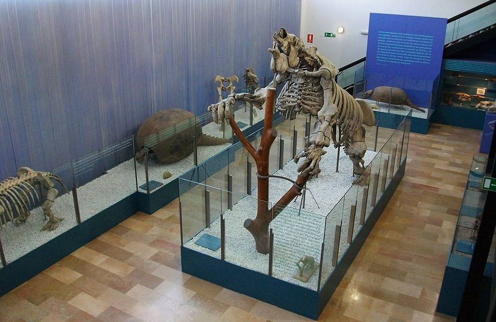 Things to do in Valencia with kids: Natural Science Museum