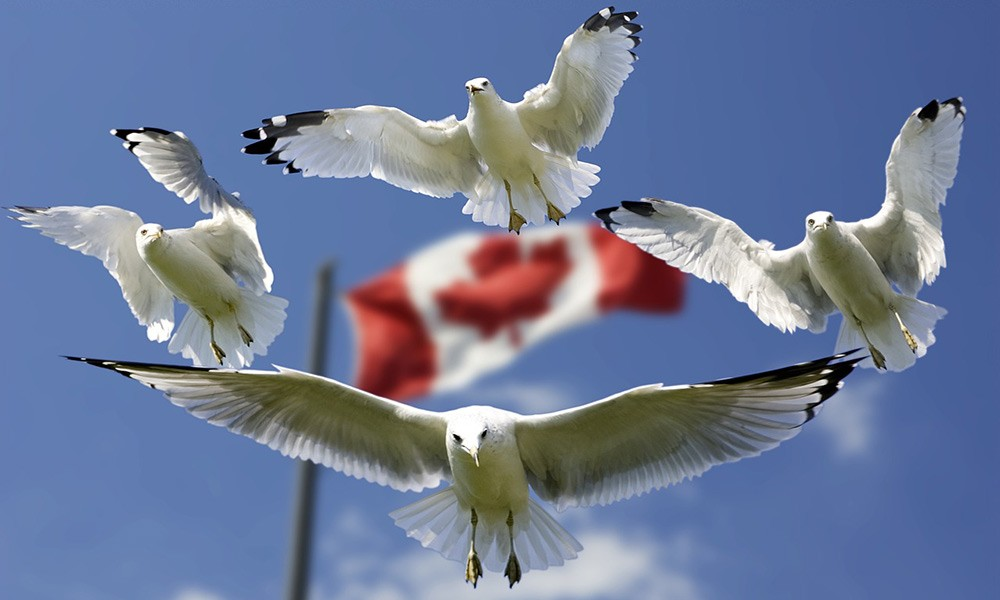 Things to know before traveling to Canada: health insurance