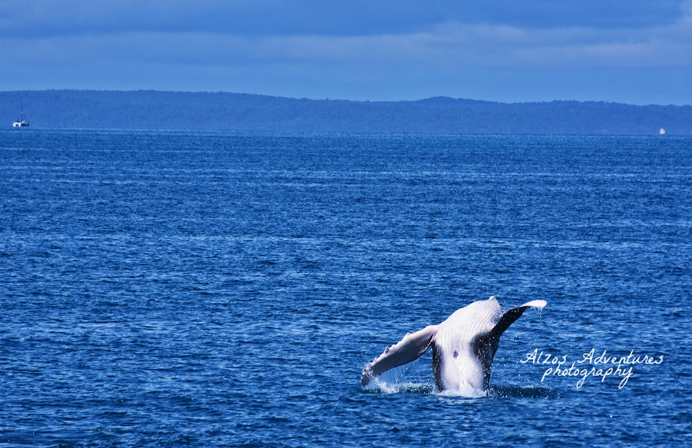 Free things to do in Hervey Bay: Whale watching from the pier