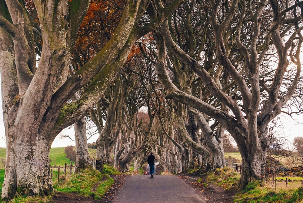 Game of Thrones filming locations in Northern Ireland: Dark Hedges