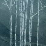 Silver birch trees cared in slate