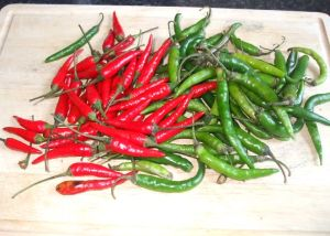 long chilli peppers