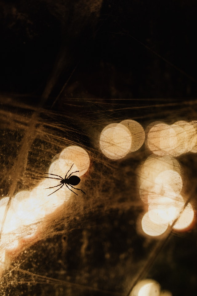 Spider Bites: Overview, First Aid And Treatment