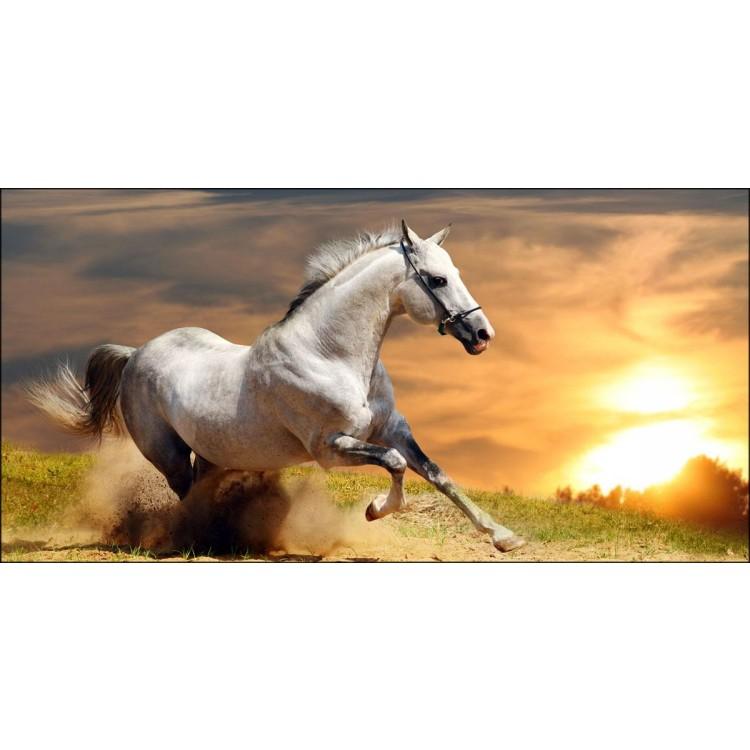 Quadro Cavallo al Galoppo  Con telaio in legno by Lupia