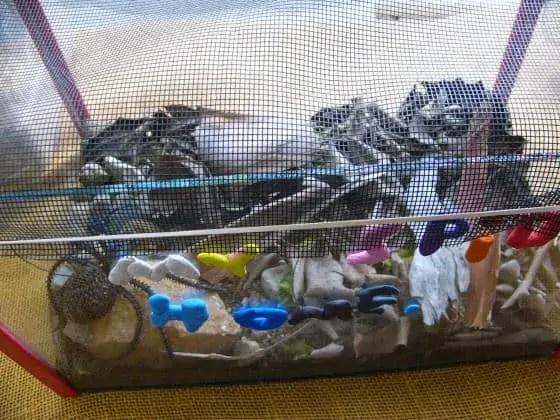 Kids Spider Home 2006