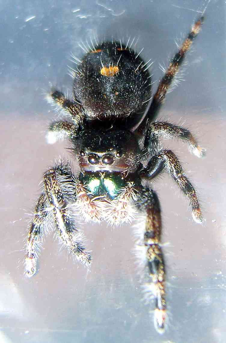 Jumping Spider from off the car door