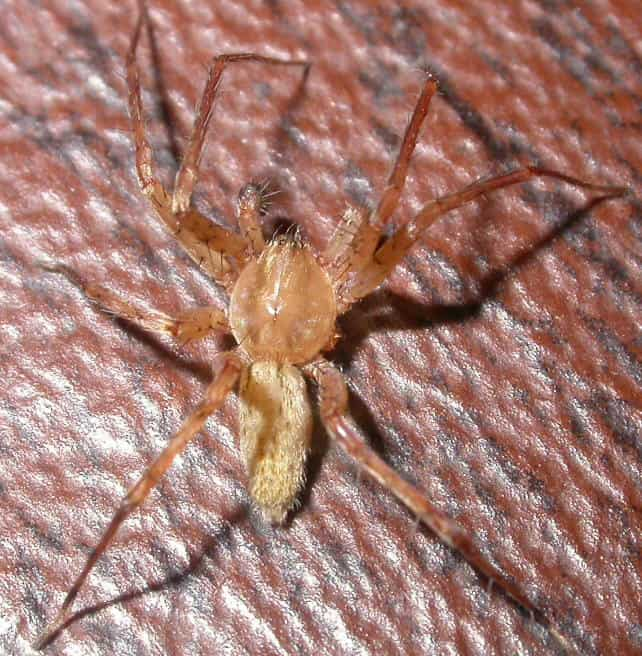 Ghost Spider hibana