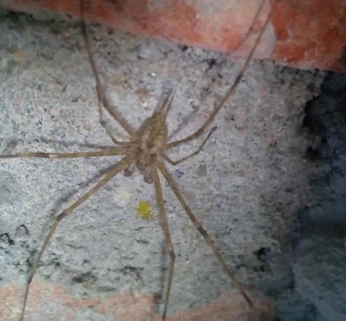 Tree Trunk Spider