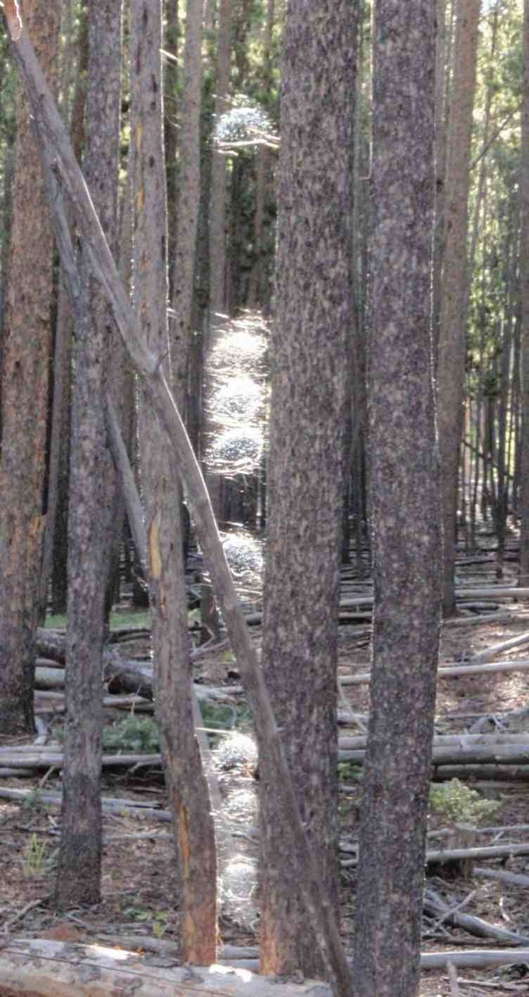 spiderWeb between trees