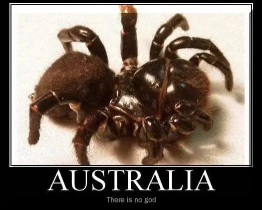 funny spider memes australia