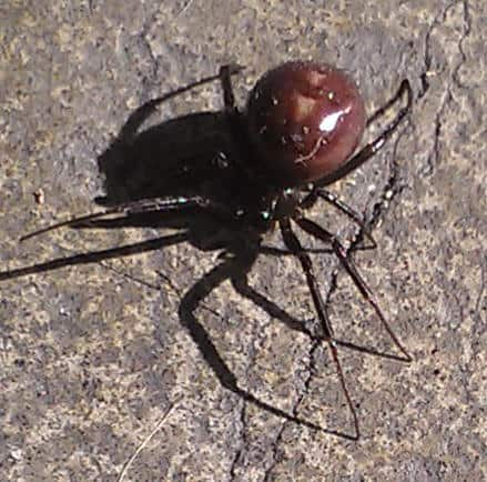 False Widow Other Places
