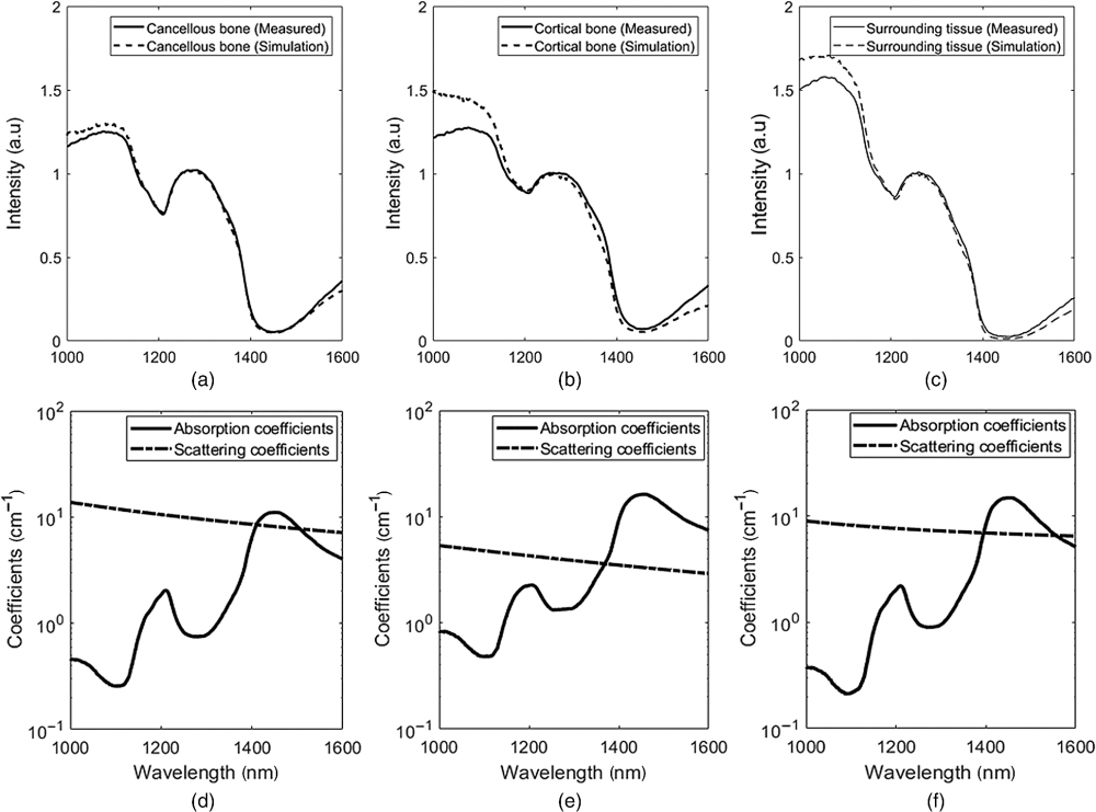 medium resolution of  a c typical experimentally measured and mc simulated spectra of cancellous cortical and surrounding tissue d f wavelength dependent absorption and