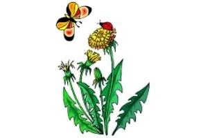 Blumen & Schmetterlinge Ausdrucken
