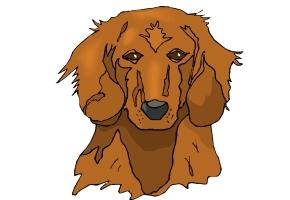 Hundekopf Malvorlagen Gratis