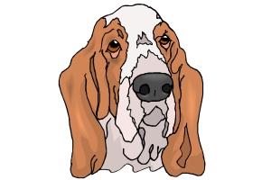 Hundekopf Malvorlagen