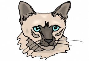Katzenkopf Zum Ausmalen