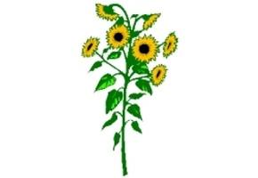 Sonnenblumen Ausmalen Kostenlos