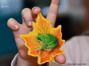 Kinderhand mit Spielmaterial Frosch