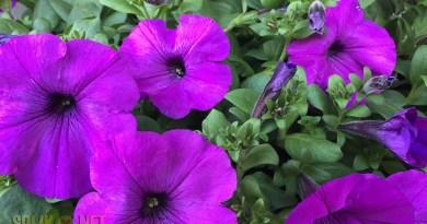 bloemenactie