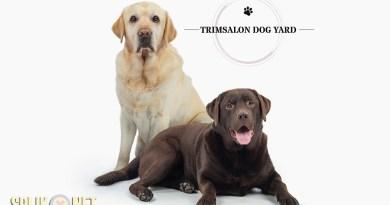 dog yard trimsalon