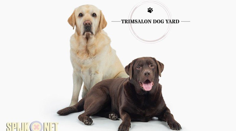 dog yard trimsalon