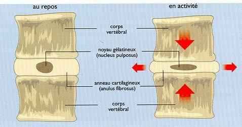 colonne-vertebral-vertebres (4)