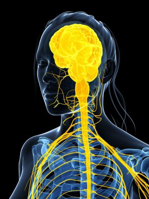 Système nerveux Spin'Dynamic O'dru