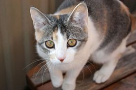 facts about cats and amazing facts