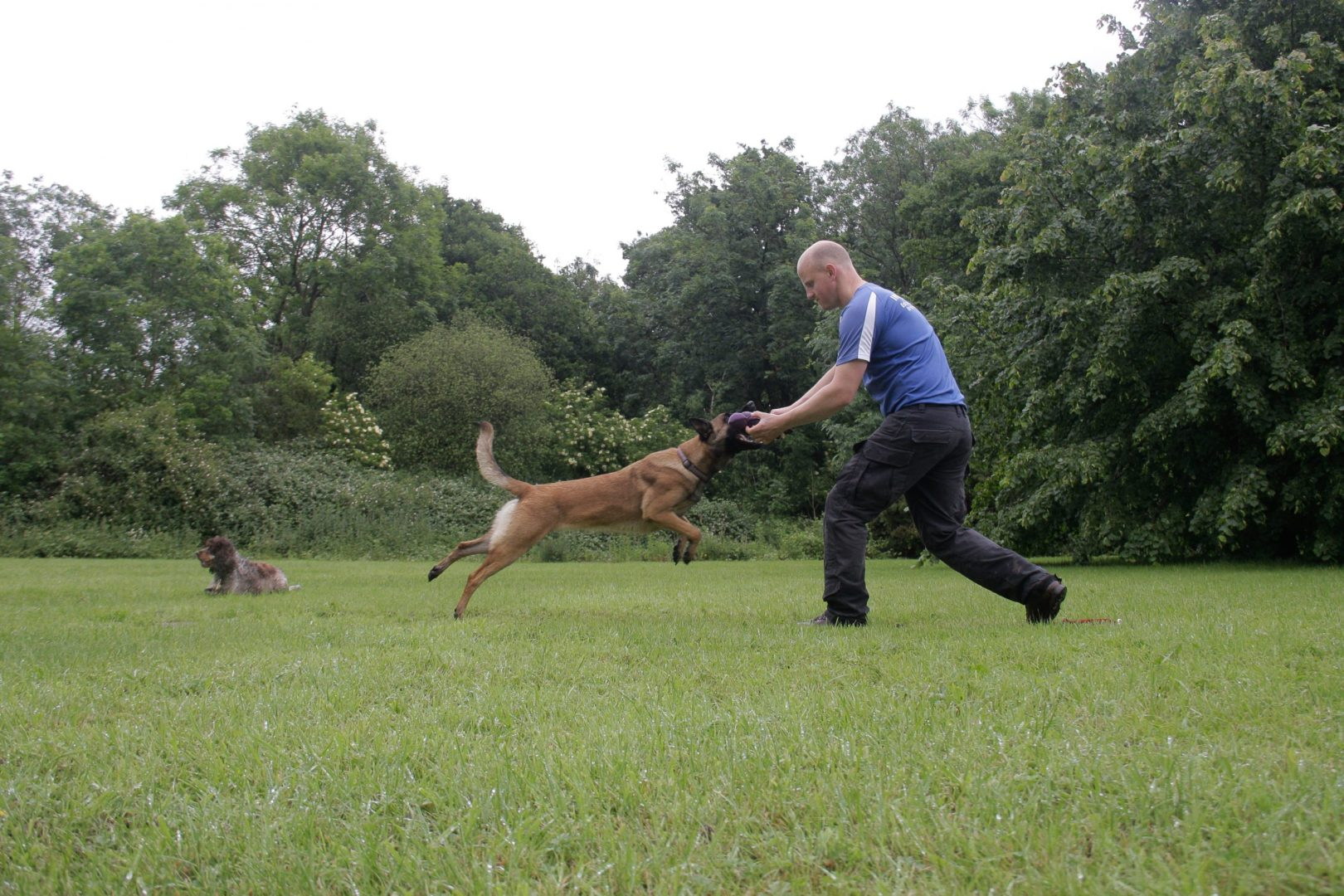 Alistair Spinks training a dog