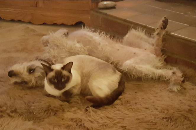 Minnie and cat