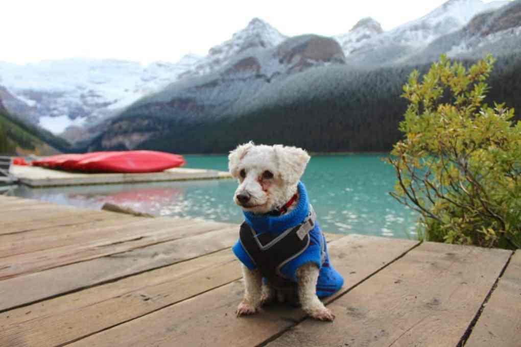 dog at lake louise with kayak rentals