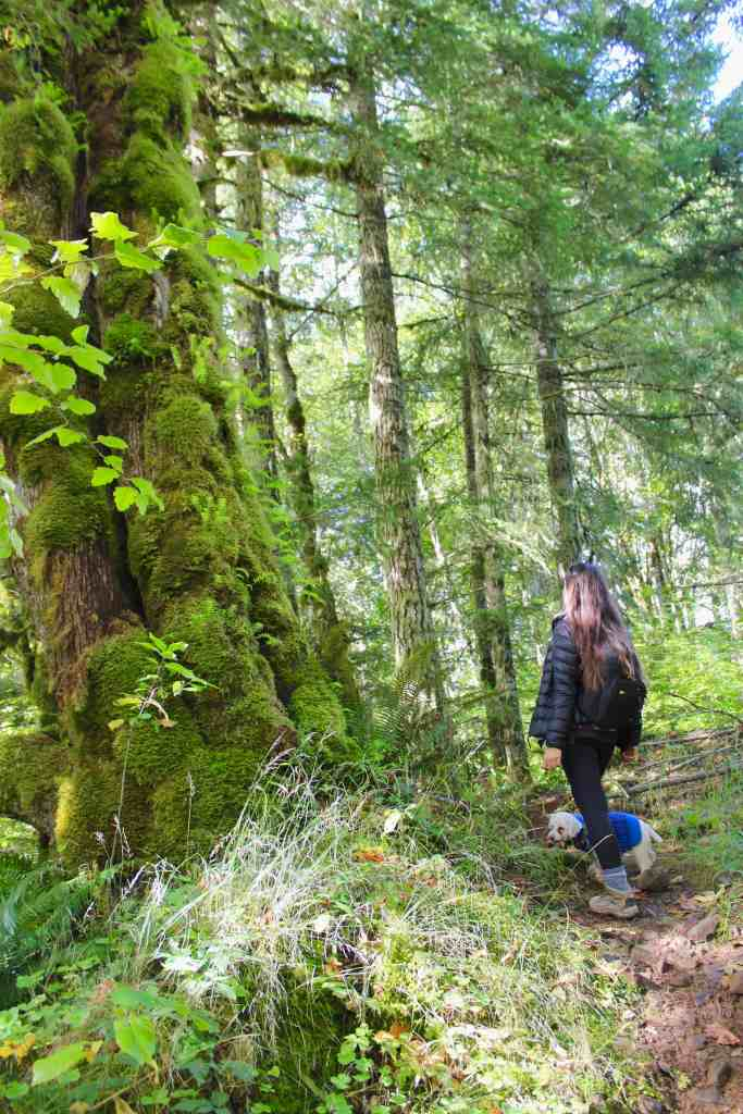 girl and dog hiking through mossy trees